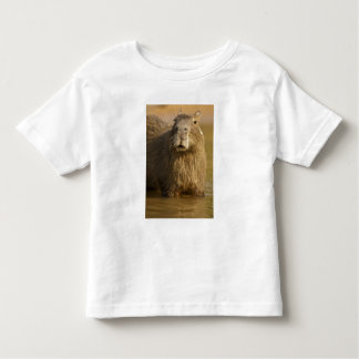 Pantanal, Brazil, Capybara, Hydrochoerus Toddler T-Shirt
