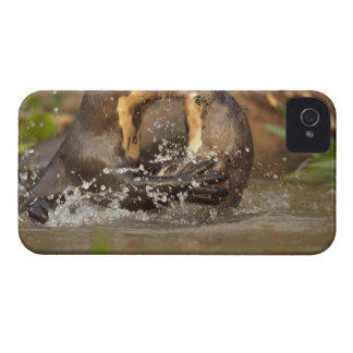 Pantanal NP, Brazil, Giant River Otter, iPhone 4 Cover