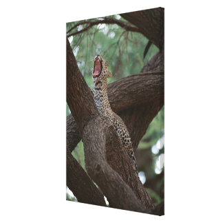 Panther Gallery Wrap Canvas