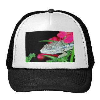 panther chameleon cap