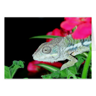 panther chameleon card