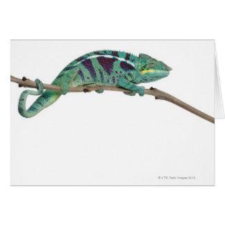 Panther Chameleon Nosy Be (Furcifer pardalis) Greeting Cards