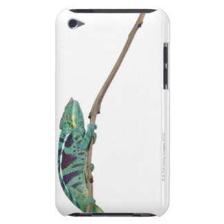 Panther Chameleon Nosy Be (Furcifer pardalis) Barely There iPod Cases