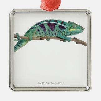 Panther Chameleon Nosy Be (Furcifer pardalis) Christmas Ornament