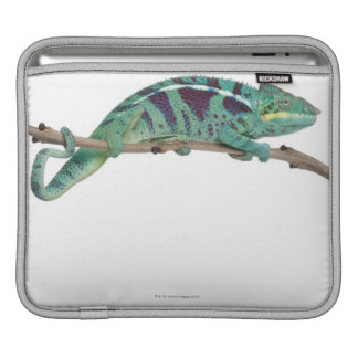 Panther Chameleon Nosy Be (Furcifer pardalis) iPad Sleeve