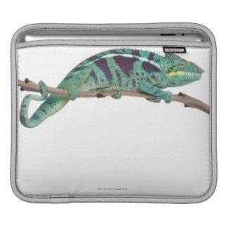 Panther Chameleon Nosy Be (Furcifer pardalis) iPad Sleeves