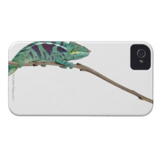 Panther Chameleon Nosy Be (Furcifer pardalis) iPhone 4 Covers