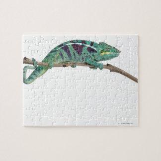 Panther Chameleon Nosy Be (Furcifer pardalis) Jigsaw Puzzle