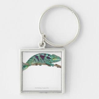 Panther Chameleon Nosy Be (Furcifer pardalis) Key Ring
