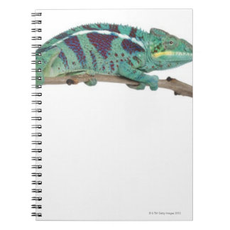 Panther Chameleon Nosy Be (Furcifer pardalis) Notebooks