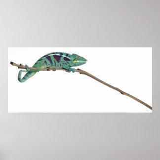 Panther Chameleon Nosy Be (Furcifer pardalis) Poster