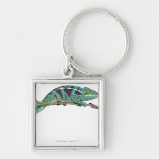 Panther Chameleon Nosy Be (Furcifer pardalis) Silver-Colored Square Key Ring
