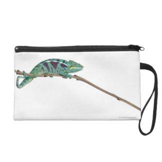 Panther Chameleon Nosy Be (Furcifer pardalis) Wristlet