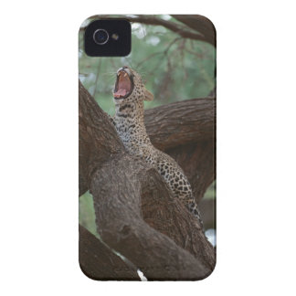 Panther iPhone 4 Cover
