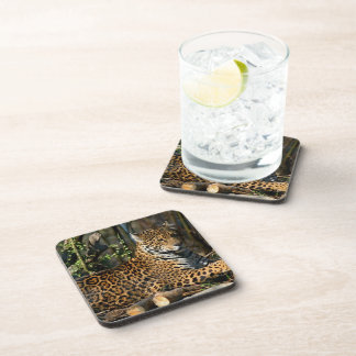 Panthera Jaguar  Cork Coasters