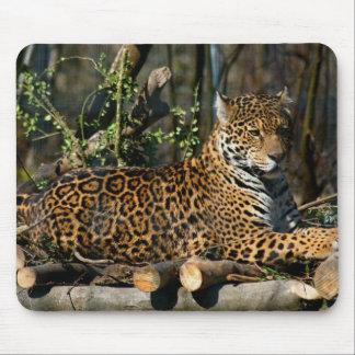 Panthera Jaguar Mouse Pad
