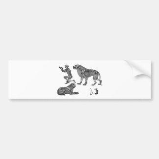 Panthera Leo - Skeleton Lions In Repose Bumper Stickers