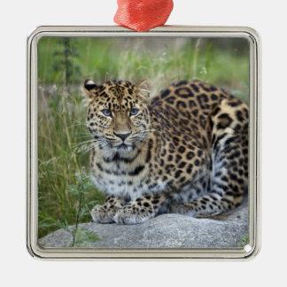 Panthera pardus orientalis christmas ornament