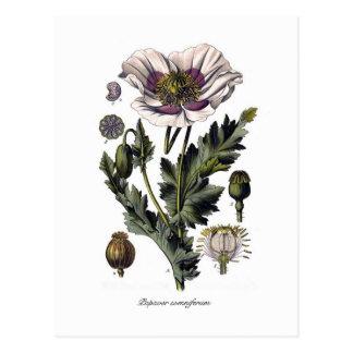 Papaver somniferum postcards