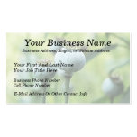 Papaver Somniferum Seed Heads Pack Of Standard Business Cards