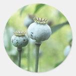 Papaver Somniferum Seed Heads Round Sticker