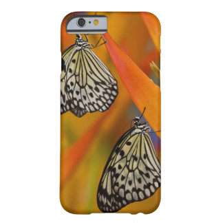 Paper Kite Butterflies (Idea leuconoe) on flower Barely There iPhone 6 Case
