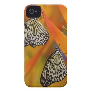 Paper Kite Butterflies (Idea leuconoe) on flower Case-Mate iPhone 4 Case