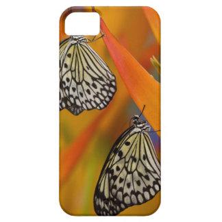 Paper Kite Butterflies (Idea leuconoe) on flower iPhone 5 Cases