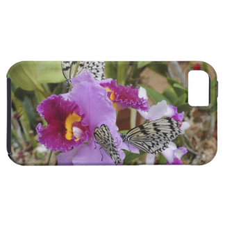 Paper Kite Butterflies (Idea leuconoe) on iPhone 5 Cases