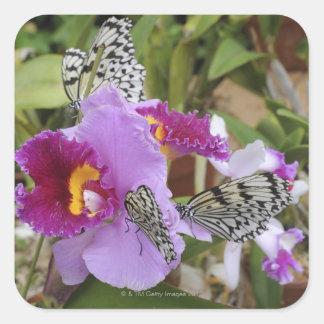 Paper Kite Butterflies (Idea leuconoe) on Square Sticker