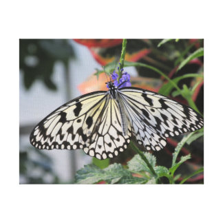 Paper Kite Butterfly Gallery Wrap Canvas