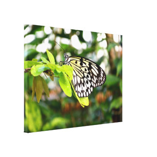 Paper kite butterfly canvas prints