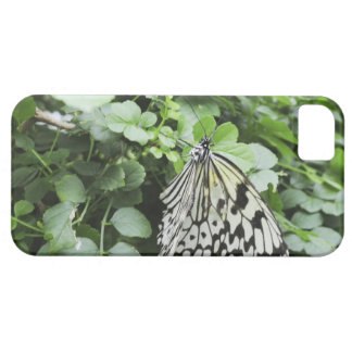Paper Kite Butterfly (Idea leuconoe) on vine, Barely There iPhone 5 Case