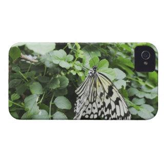 Paper Kite Butterfly (Idea leuconoe) on vine, Case-Mate iPhone 4 Cases