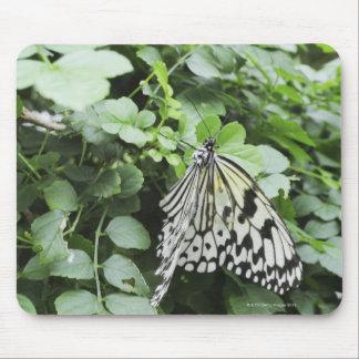 Paper Kite Butterfly (Idea leuconoe) on vine, Mouse Mat