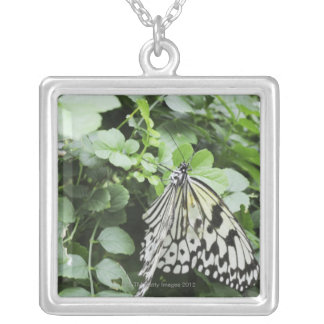 Paper Kite Butterfly (Idea leuconoe) on vine, Silver Plated Necklace