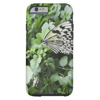 Paper Kite Butterfly (Idea leuconoe) on vine, Tough iPhone 6 Case