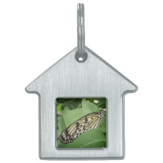 Paper Kite Butterfly Macro Pet Tag