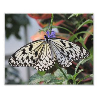 Paper Kite Butterfly Art Photo