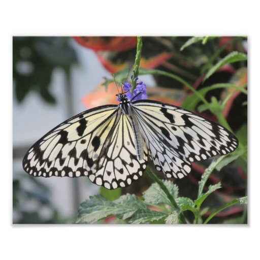 Paper Kite Butterfly Art Photo