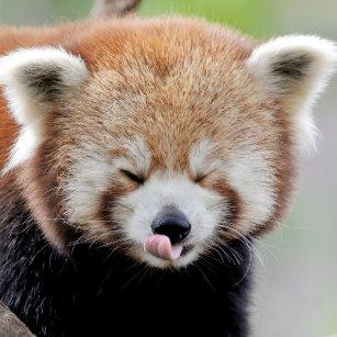 Panda Plates Zazzle Uk