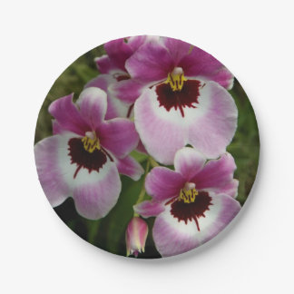 Paper Plates - Pansy Orchid