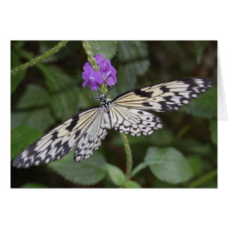 Paperkite Butterfly Note Card
