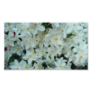 Paperwhite Narcissus Delicate White Flowers Photographic Print