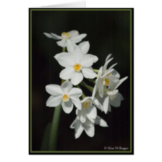 Paperwhite Narcissus Greeting Card