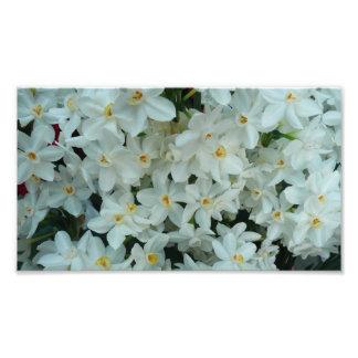 Paperwhite Narcissus Photo Print