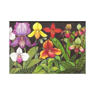 Paphiopedilum Ladys Slipper Orchids Wrapped Canvas Canvas Print