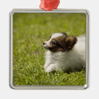 Papillon 2 christmas ornament