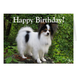 Papillon Birthday or Greeting Card