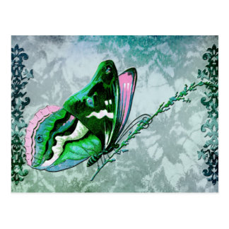 PAPILLON COLORÉ in TEAL BLUE, GREEN and PINK Postcard